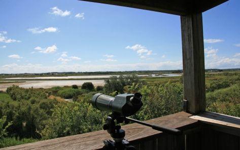 observatoire d oiseaux-- Ile d'Olonne credit photo Grolleau
