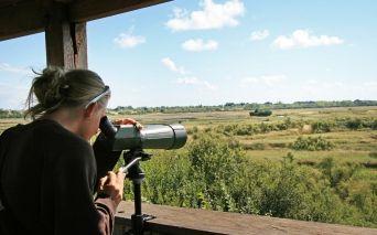 Observatoire-d-oiseaux---Credit-POGrolleau