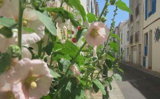 quartier du passage - Les Sables d'Olonne